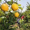 Weleda Citrus Erfrischende Feuchtigkeitslotion