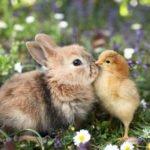 Warum essen Veganer keine Eier?