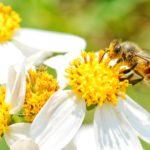 Warum essen Veganer keinen Honig?